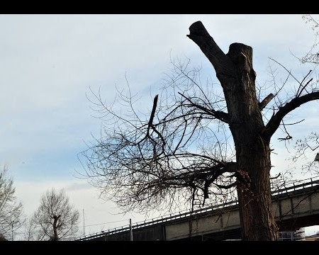 Diamante: Taglio degli alberi, sopralluogo al parco la Valva- servizio video