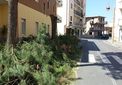 Anche a Belvedere Marittimo, scoppia il caso della capitozzatura degli alberi