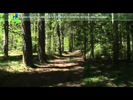 Il Parco Nazionale della Sila si è dotato di un Arboreto