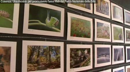 Cosenza, una mostra per promuovere l'area MaB del Parco Nazionale della Sila