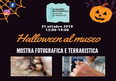 Diamante: 3^ edizione di Halloween al Museo, evento organizzato dall'Acquario Multimediale