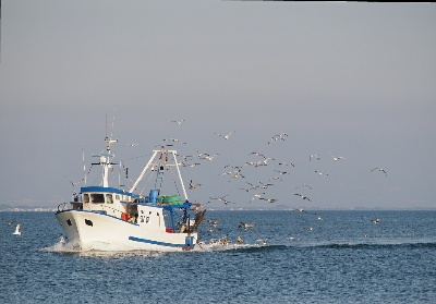Pesca del tonno rosso. Cresce la quota riservata ai pescatori calabresi
