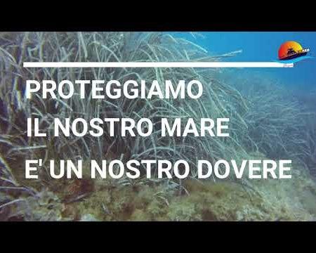 Alla Scoperta della Posidonia Oceanica tra i fondali di Diamante e Belvedere M.mo
